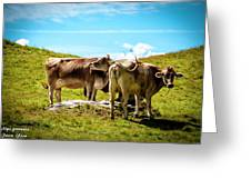 Happy Swiss Cows Greeting Card