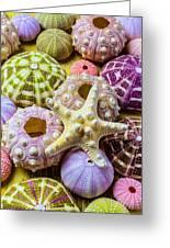 Syarfish And Sea Urchins Greeting Card