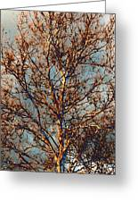 Sycamore Against November Sky Greeting Card