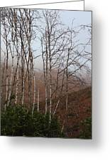 Sycamore Canyon Trail In Rain Greeting Card
