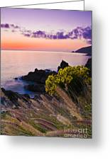 Sycamore Cove After Sunset Greeting Card