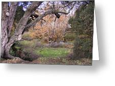 Sycamore Grove Fall Greeting Card