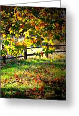 Sycamore Grove Fence 2 Greeting Card