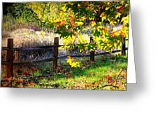 Sycamore Grove Series 11 Greeting Card