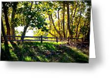 Sycamore Grove Series 12 Greeting Card