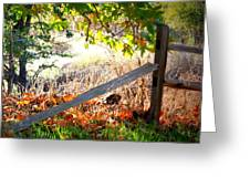 Sycamore Grove Series 8 Greeting Card