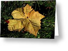 Sycamore Leaf Greeting Card