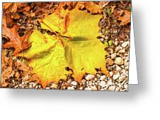 Sycamore Leaf  In Fall Greeting Card