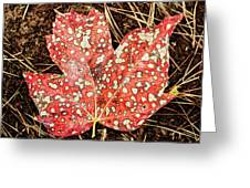 sycamore maple Autumn leaf Greeting Card