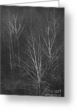 Sycamore Series 1 Greeting Card
