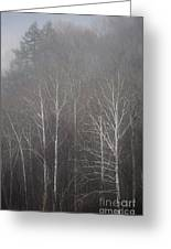 Sycamore Series 5 Greeting Card