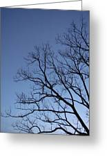 Sycamore Silhouette Greeting Card