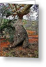 Sycamore Tree And Fall Leaves Greeting Card
