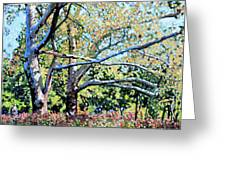 Sycamore Trees At The Zoo Greeting Card