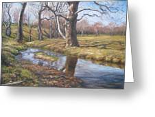 Sycamores Greeting Card