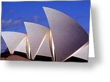 Sydney Harbor Fins Greeting Card