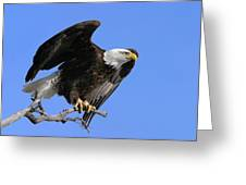 Symbol Of Freedom Greeting Card by Ronnie and Frances Howard