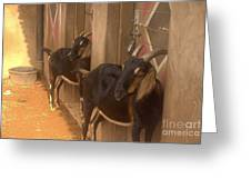 Synchronized Goat Standing Team Usa Greeting Card