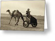 Syria: Camel Race, C1938 Greeting Card