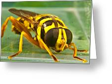 Syrphid Eye To Eye Greeting Card