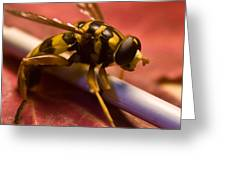 Syrphid Fly Poised Greeting Card