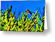 Syrphid Fly  Greeting Card