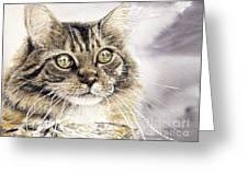 Tabby Cat Jellybean Greeting Card