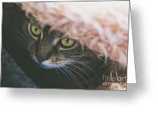 Tabby Cat Looking From Beneath A Blanket  Greeting Card