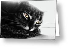 Tabby Cat Selective Color Greeting Card