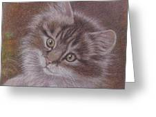 Tabby Kitten Greeting Card by Dorothy Coatsworth