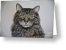 Tabby-lil' Bit Greeting Card by Megan Cohen