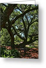 Table Under The Oak Tree Greeting Card