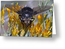 Tachinid Fly Greeting Card