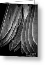 Tail Feathers Abstract Greeting Card