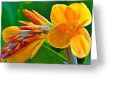 Tail Of Color Greeting Card