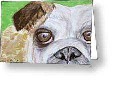 Take Me Home - Bulldog Greeting Card by Barbara Giordano