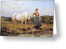 Taking A Horse To Water Greeting Card