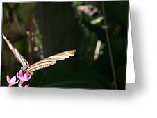 Taking Flight - Butterfly Greeting Card