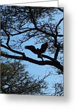 Taking Flight South Africa Greeting Card