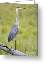 Taking In The Scenery Greeting Card