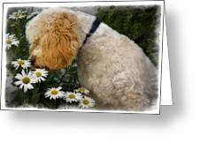 Taking Time To Smell The Flowers Greeting Card