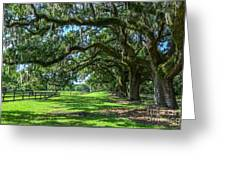 Tale Of The Oaks Greeting Card