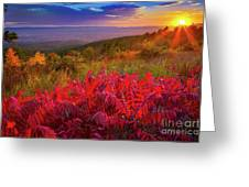 Talimena Evening Greeting Card