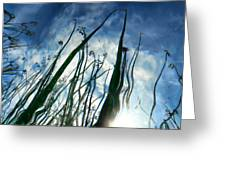 Talking Reeds Greeting Card