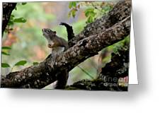 Talking Squirrel Greeting Card