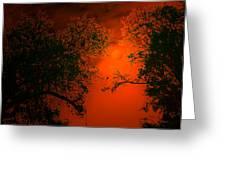 Talking Trees Of Night Greeting Card