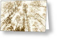 Tall Aspens Greeting Card