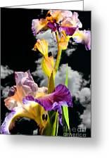 Tall Bearded Iris Greeting Card