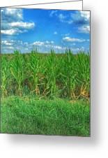 Tall Corn Greeting Card