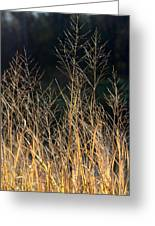 Tall Fall Grasses Greeting Card
